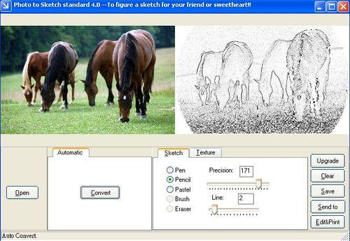 動物照片轉素描作品(筆觸使用鉛筆)