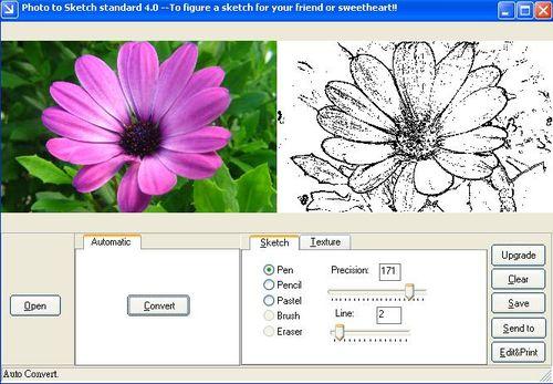 植物花照片轉素描作品(筆觸使用鋼筆)